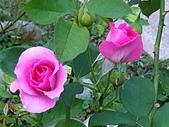 澄清湖的浪漫玫瑰花(蘭花):20200202_173749.jpg