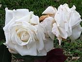 澄清湖的浪漫玫瑰花(蘭花):20200202_174153.jpg