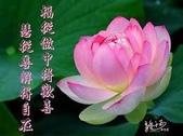 網路相片分享:1260860_473114236132973_1928325984_n.jpg