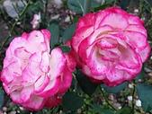 澄清湖的浪漫玫瑰花(蘭花):20200202_173625.jpg