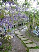 紫藤咖啡園:1010409 (88).JPG