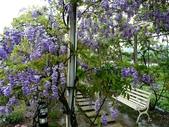 紫藤咖啡園:1010409 (100).JPG