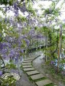 紫藤咖啡園:1010409 (96).JPG