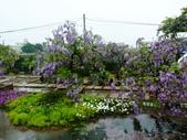 紫藤咖啡園:1010409 (102).JPG
