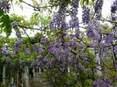 紫藤咖啡園:1010409 (77).JPG