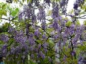 紫藤咖啡園:1010409 (78).JPG