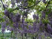 紫藤咖啡園:1010409 (79).JPG