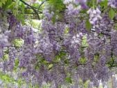紫藤咖啡園:1010409 (80).JPG