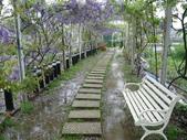 紫藤咖啡園:1010409 (81).JPG