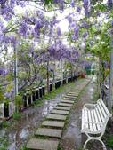 紫藤咖啡園:1010409 (83).JPG