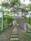 紫藤咖啡園:1010409 (85).JPG