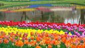 富士山~風景~花.植物~:12_01.jpg