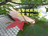 台灣台中.其他:2014.11.19 (1).jpg