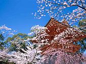 富士山~風景~花.植物~:990411x