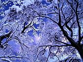 富士山~風景~花.植物~:wap-124-1024