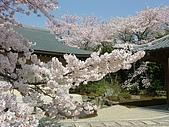 富士山~風景~花.植物~:sp11