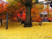 富士山~風景~花.植物~:12_112_1