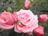 圓覺寺+:彩色玫瑰 023.JPG