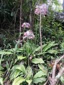 認識植物2.0 (59) 長:長距根節蘭xx02.jpg