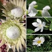 認識植物2.0 (21) 白:相簿封面