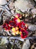 認識植物2.0 (63) 南:南瓜山竹xx02.jpg