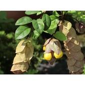 認識植物(63) 菜菝菟菠菩菫華菱菲菸菾萎著蛛蛟裂:相簿封面