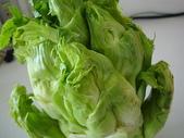 認識植物2.0 (66) 威娃屋屏峇:娃娃菜zz01.jpg