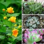 認識植物2.0 (61) 雨青:相簿封面