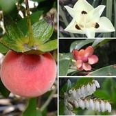 認識植物2.0 (63) 南:相簿封面