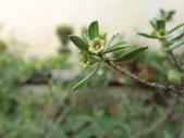 植物隨手拍 AR:水芫花ar6864.JPG