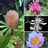 認識植物2.0 (33) 串亨伸佛克:相簿封面