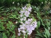 認識植物2.0 (59) 長:長距白鶴蘭xx01.jpg