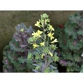 認識植物(70) 腰萬萱萼落葉葎葛葡葫葶蒂:相簿封面