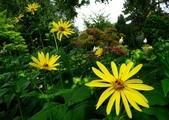 認識植物2.0 (33) 串亨伸佛克:串葉松香草xx02.jpg