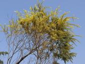 認識植物(70) 腰萬萱萼落葉葎葛葡葫葶蒂:落羽杉cn7614.JPG