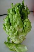 認識植物2.0 (66) 威娃屋屏峇:娃娃菜zz02.jpg
