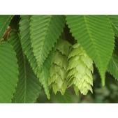 認識植物(69) 當痲矮碎碗稗稜節粳群義聖:相簿封面