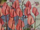 認識植物(61) 紫:紫火鶴dp0679.JPG