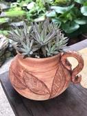 認識植物(66) 黑:黑瓦松xx01.jpg