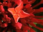 植物隨手拍 BW:大王仙丹bw5365.JPG