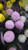 認識植物2.0 (23) 乒交伊伏光:乒乓菊xx02.jpg