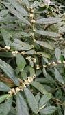 認識植物2.0 (34) 兵冷卵君含:冷青草xx04.jpg