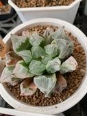 認識植物2.0 (24) 冰列印合吉:冰城xx02.jpg