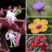 認識植物2.0 (28) 朱朴江池灰:相簿封面