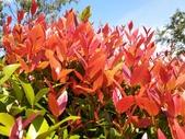 認識植物2.0 (59) 長:長虹木xx01.jpg