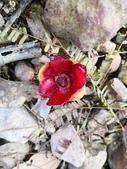 認識植物2.0 (63) 南:南瓜山竹xx03.jpg