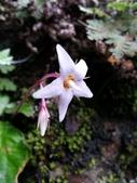 認識植物2.0 (22) 皮矢石禾立:皮草花xx03.jpg
