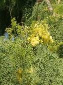認識植物(64) 象費貼超酢量鈕開陽雁雲韌須:象腳樹xx02.jpg