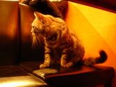 2011年三月 關渡  鍋爐咖啡:DSC09636.JPG