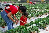 2009.03.21鯉魚潭水庫,大湖草莓:DSC_9751.JPG